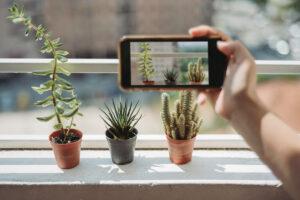 Cactus succulent plants in pots